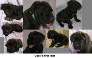 Gucci's first litter